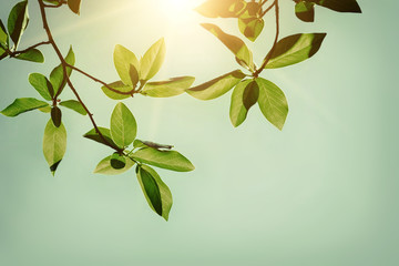Fresh green leaves against sunny sky background. Wall mural