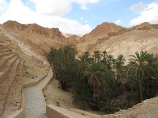 Poster de jardin Tunisie Mountain oasis of Chebika with palm trees in sandy Sahara desert, blue sky, Tunisia, Africa.
