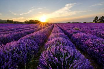 Champ de lavande en Provence, le Mont Ventoux en arrière-plan. Coucher de soleil.