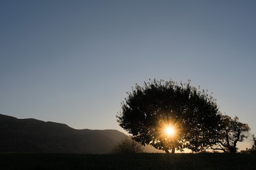 the rays of the setting sun make their way through the branches of a tree against the background of mountains