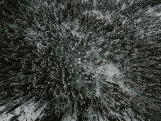 moody forest in winter from a drone