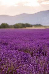 Foto op Canvas Zonsondergang lavender field france