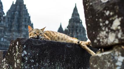 cat sleeping in temple