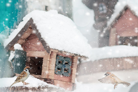 A pair of gray and brown sparrows eats i and squirrel feeder house from plywood in the winter park