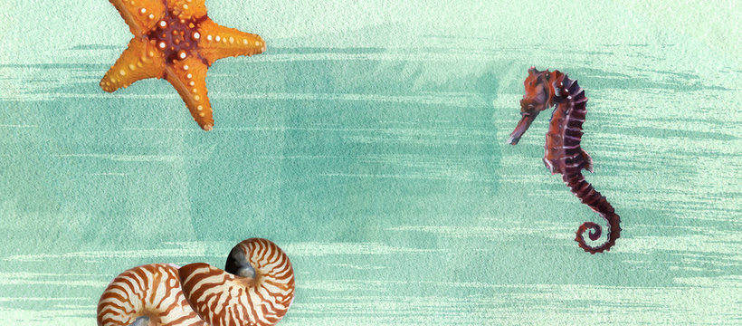 Sealife summer banner with oil paint and watercolor brushes. Seashell, seahorse, starfish  on a marine background with text space.