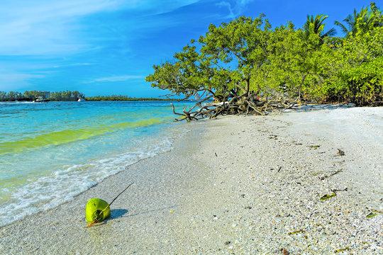 Coconut at Lido Keys, Sarasota