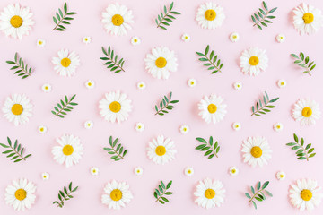 Wall Mural - Pattern made of chamomiles, petals, leaves on pink background. Flat lay, top view