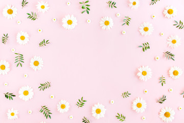 Wall Mural - Frame made of chamomiles, petals, leaves on pink background. Flat lay, top view