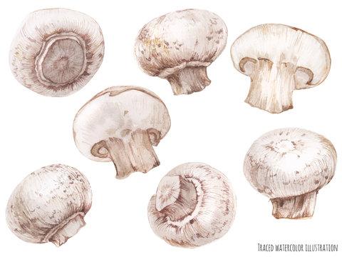 watercolor illustration of champignon