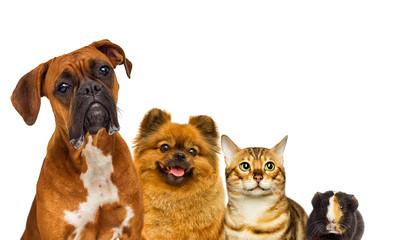 Fototapete - set of pets watch