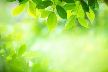 Green nature background. Closeup natural view of green leaf with beauty bokeh background for nature and freshness  Wall mural