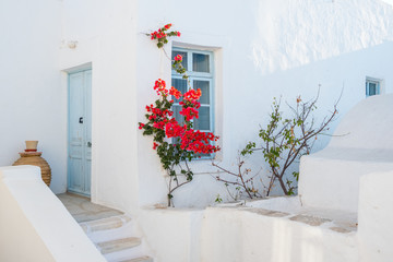 White house facade with blue door, window and  beautiful flowers in Naoussa town, Paros island,...