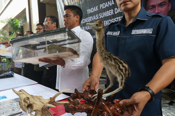 Police officers show evidence of smuggled endangered animals at East Java police headquarters in Surabaya