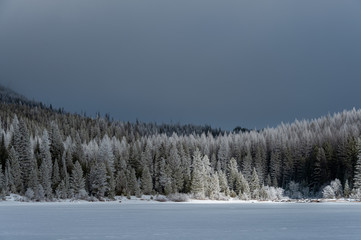 View of snow covered forest during winter