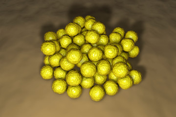 Colony of bacteria Micrococcus luteus, 3D illustration. Gram-positive cocci producing yellow pigment and colonizing human skin, soil, dust and water
