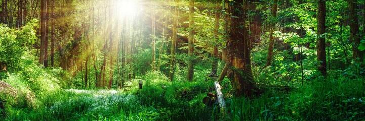Panorama Landschaft, Wald im Frühling mit Sonnenstrahlen durch die Bäume