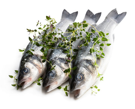 Fresh whole sea bass fish with thyme herb isolated on a white