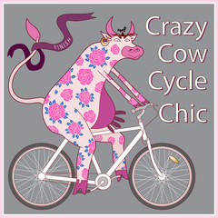Crazy Cow Cycle Chic. Humorous tee shirt print. Cartoon  painted with roses , cow in pink gloves,  riding a white bicycle on a dark gray background. Book cover, post card, party invitation
