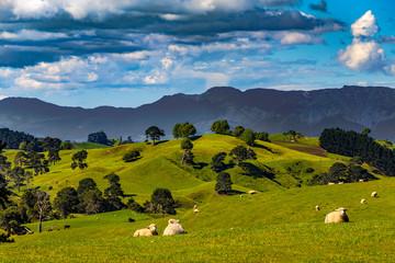 New Zealand, North Island, Waikato Region. Rural landscape near Matamata. There is Kaimai Range in the background