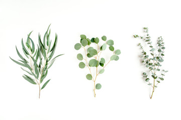 Mix of herbs green branches, leaves eucalyptus and plants collection on white background. flat lay, top view