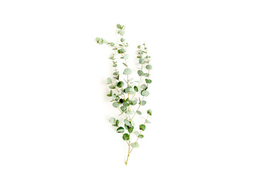Wall Mural - green branch eucalyptus on white background. flat lay, top view