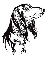 Decorative portrait of Saluki Dog vector illustration