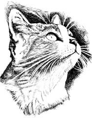 Door stickers Hand drawn Sketch of animals Zeichnung Katzenkopf
