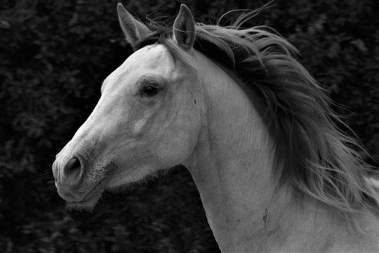 1 275 Best Cremello Images Stock Photos Vectors Adobe Stock
