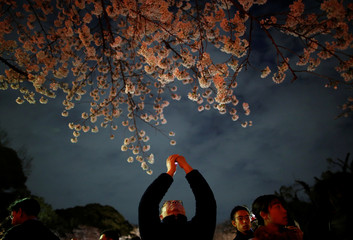A visitor takes a photo under illuminated cherry blossoms in full bloom at Ueno Park in Tokyo