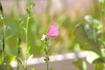 Beautiful pink flower and fluttering butterfly