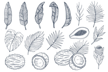 Set with palm leaves and exotic fruits papayas, coconuts and exotic flovers, banana leaves. Hand drawn vector