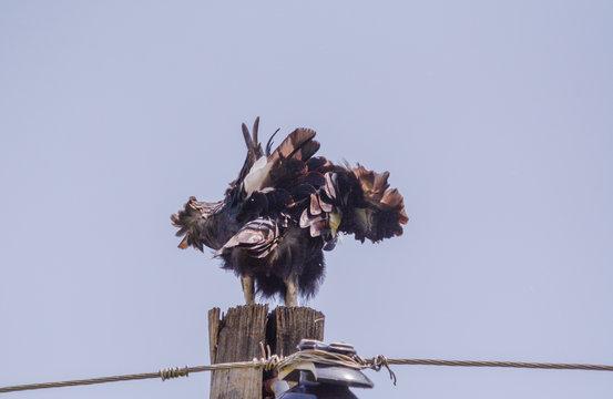Endemic bird in Etuiopian