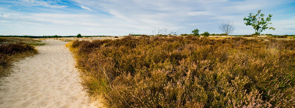 heather and sand path in national park Loonse and Drunense Duinen, The Netherlands. Panorama