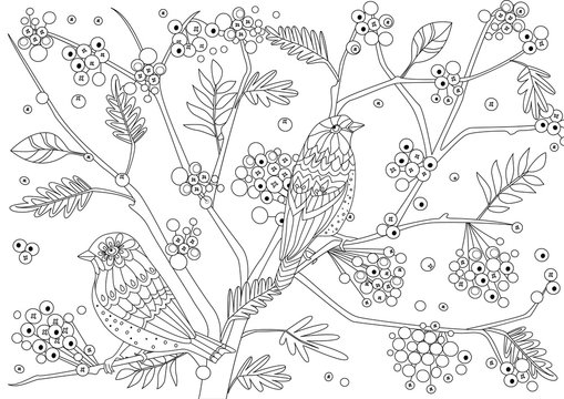 couple of pretty birds in fruit forest for your coloring page