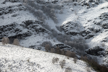 Mountain slopes with birch forest after a snowfall