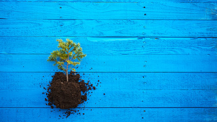 tree sapling grounded blue board