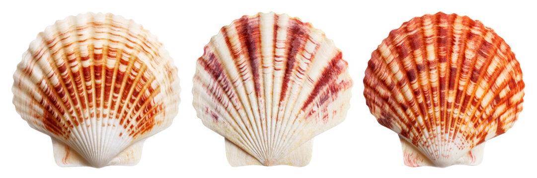Set of sea shells, isolated on white background