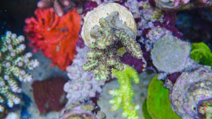 Corals in the aquarium with colors