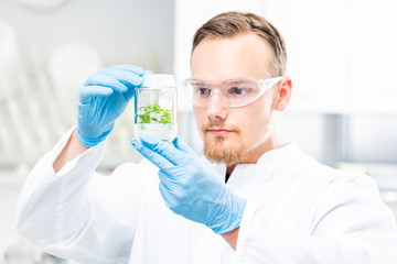 Wissenschaftler untersucht gentechnisch veränderte Pflanze