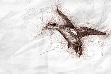Wall Mural - Sketch of Mallard Ducks in Flight