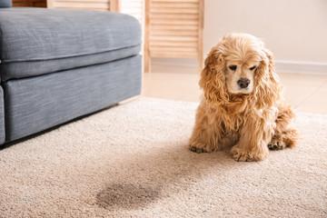 Cute dog near wet spot on carpet Wall mural