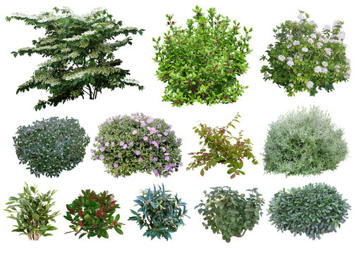 Arbustes