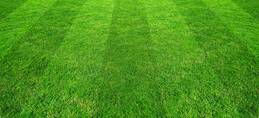 Green grass field pattern background for soccer and football sports. Green lawn pattern and texture for background.