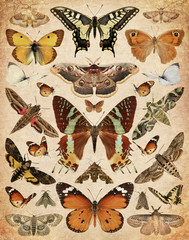 Butterflies and moths. Old paper textured background