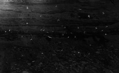 Vögel Möwen im Flug am Felsen