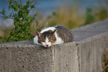 猫大福~Japanese[Daihuku] like a cat.