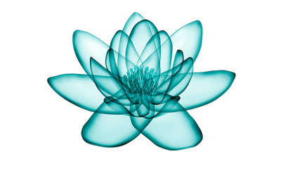 x-ray image of a flower  isolated on white, the lotus 3d illustration.