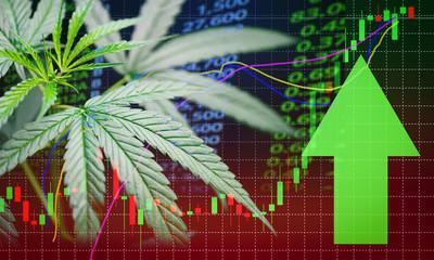 Business marijuana leaves cannabis stock success market price green arrow up profit growth