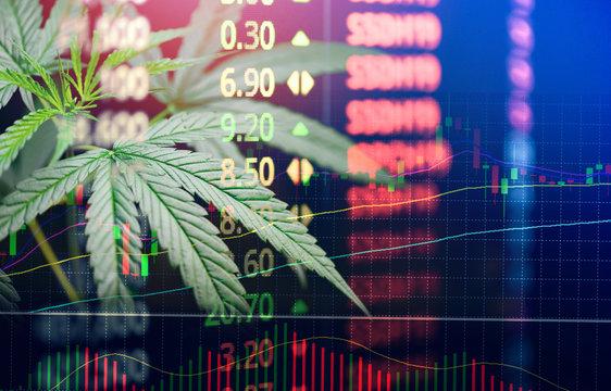 Business marijuana leaves cannabis stock exchange market