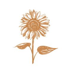 Sunflower sketch illustration.